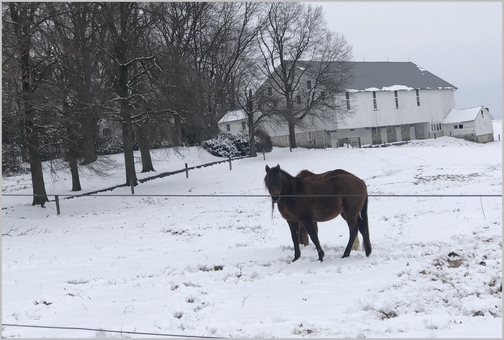 Gibble Road horses in snow 3/1/19 (Click to enlarge)
