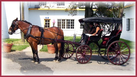 Horse and carriage at Lauxmont farms
