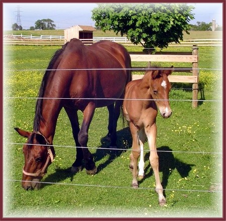 Horse and colt (Photo by Brenda Harry)