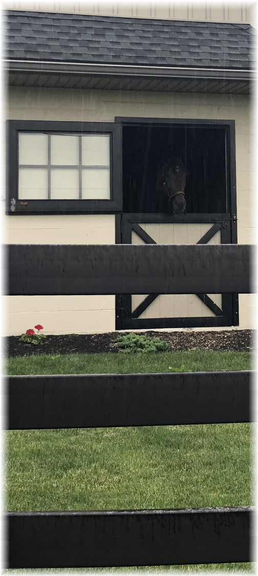 Horse looking out stall in rain 6/21/18