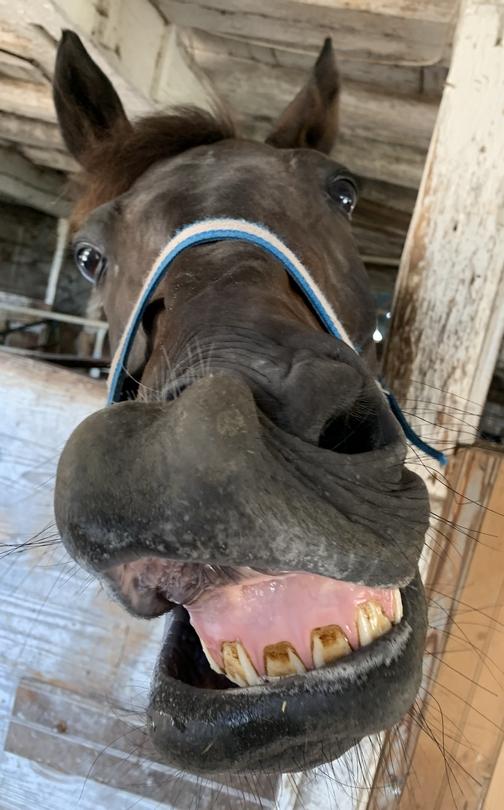 Horse teeth 7/17/19