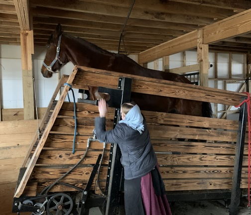 Horse treadmill in upstate New York 3/15/20