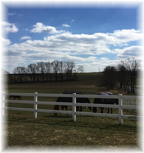 Horses on Kraybill Church Road 2/26/17