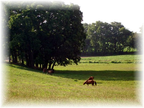 Horses on Kraybill Church Road 7/20/10