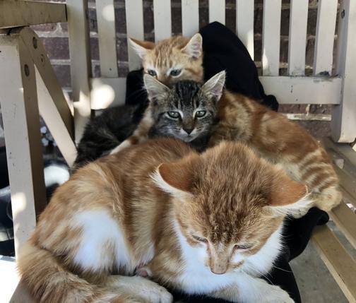 Kittens 10/19/19