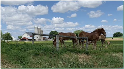 Horses in Lancaster County, PA 5/27/19 (Click to enlarge)