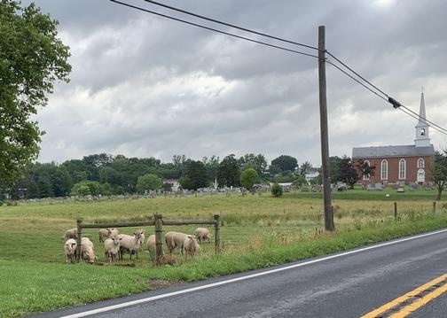 Lebanon County sheep 6/25/19