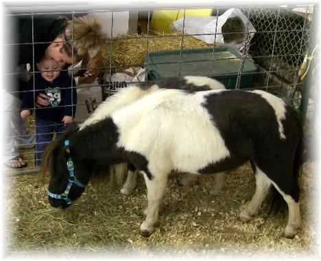Miniature horses and boy at Manheim farmshow