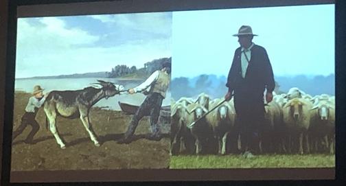 Mule/sheep slide 7/14/19