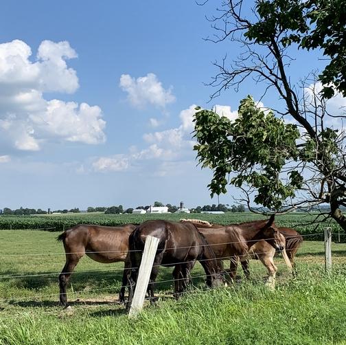 Mules 7/14/19