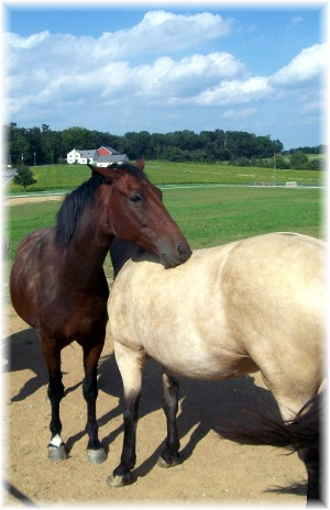 Nuzzling horses