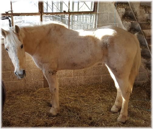 Amish horse 2/28/17