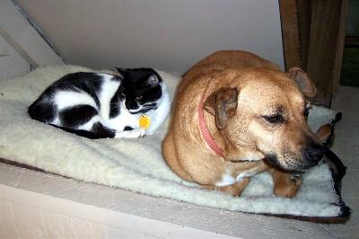 Pet unity