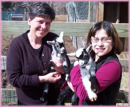 Pygmey goats