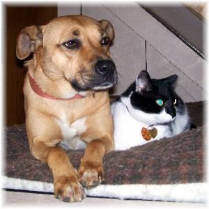 Roxie and Dottie
