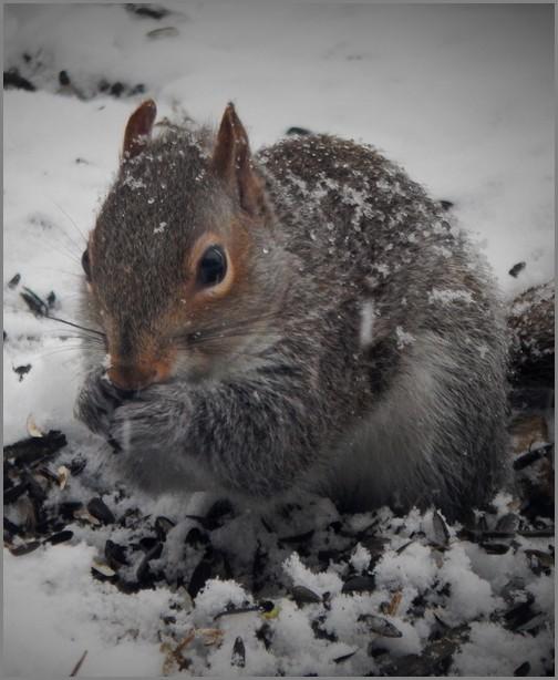 Squirrel taken by Ester 2/20/19