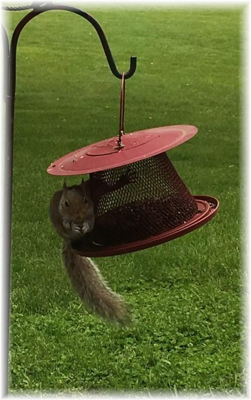 Squirrel 5/13/17