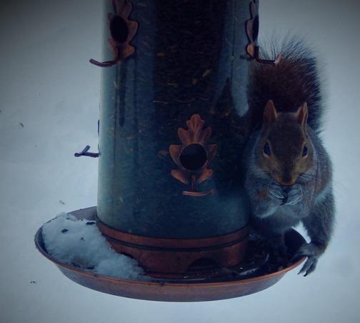 Squirrel on feeder (Ester)