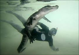 Swimming with crocodiles