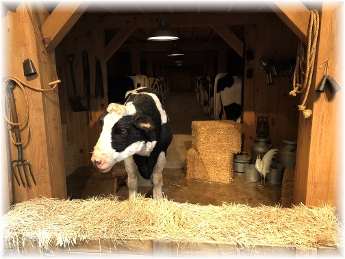 Talking cow at Billy Graham Library 3/19/18