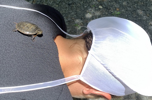 Turtle on back