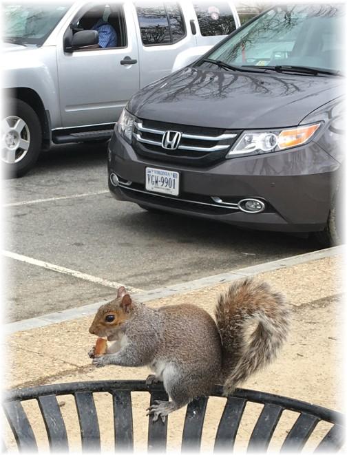Washington squirrel 3/25/16