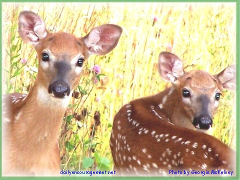 Twin fawns in Wisconsin