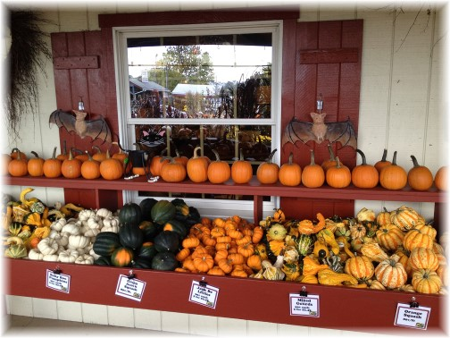 Ashcombe pumpkins 9/16/14