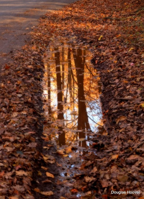 Autumn reflection by Douglas Hoover