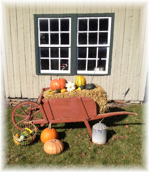 Eastland Alpaca Farm autumn display 11/15/15