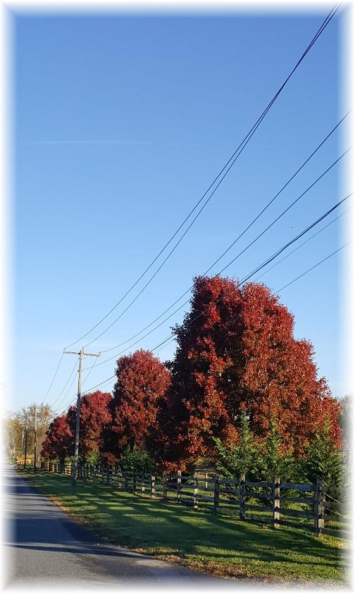Fall foliage 11/10/16