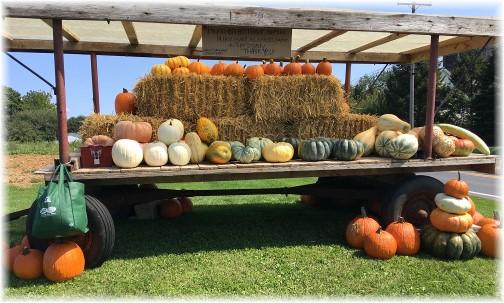 First seen 2017 Autumn wagon 9/10/17
