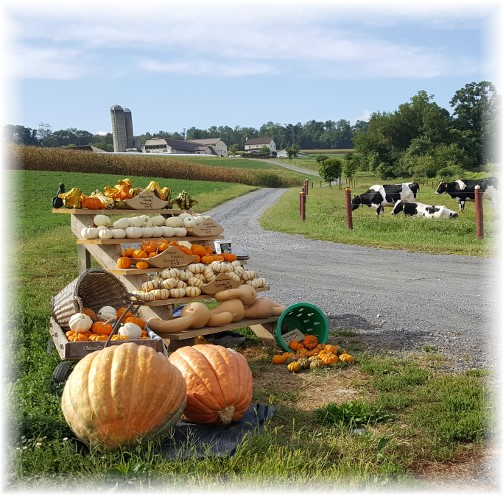 Harvest Road farmstand 9/20/16