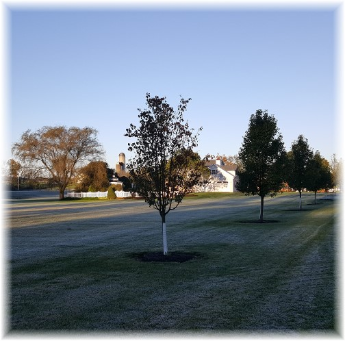 Frosty morning in Lebanon County 10/17/17 (Click to enlarge)