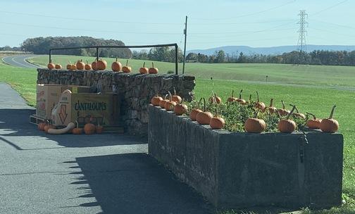 Lebanon County pumpkins