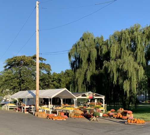 Pops produce stand 9/19/19 (Click to enlarge)
