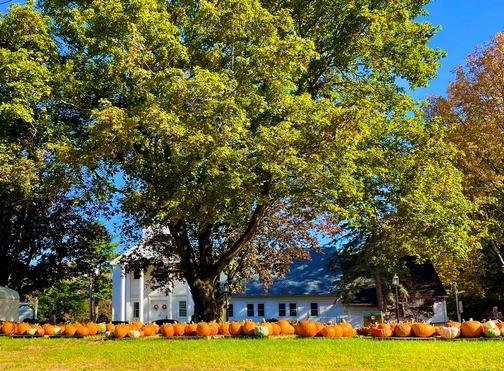 Sturbridge church pumpkin patch