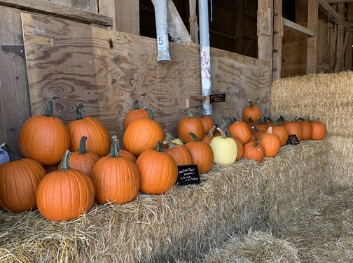 Pumpkins on hay bales, Lancaster County, PA 10/24/19