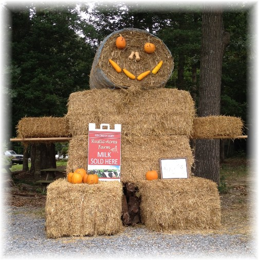 Straw bale man on dairy farm near Rehobeth Beach DE 09-21-14