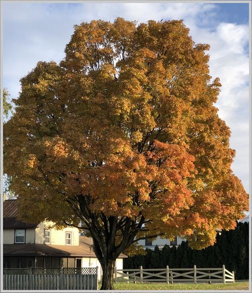 Autumn colors 11/1/18