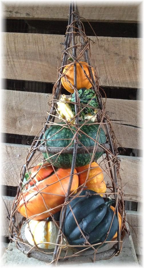 Pumpkins at Union Mill Acres 9/10/14