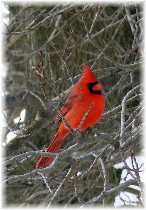 Bird photo by Steven Binkley