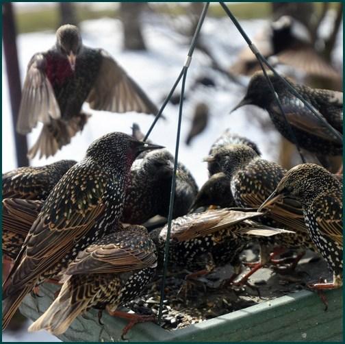 Bird feeder photo by Doris High
