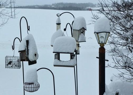 Bird feeders (Doris High)
