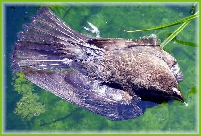 Bird in pond