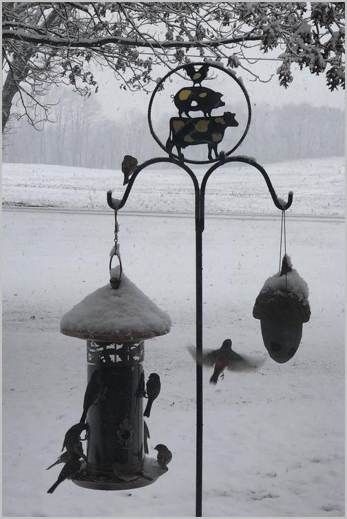 Snowy birdfeeder 1/29/19