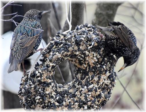 Winter birds (Photo by Doris High)