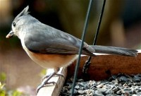 Bird's eye view (photo by Doris High)