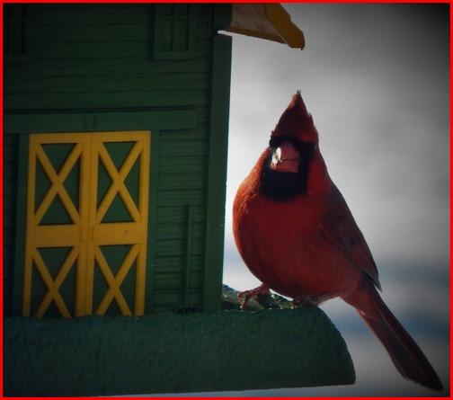 Cardinal at birdfeeder 1/31/19 (Ester)