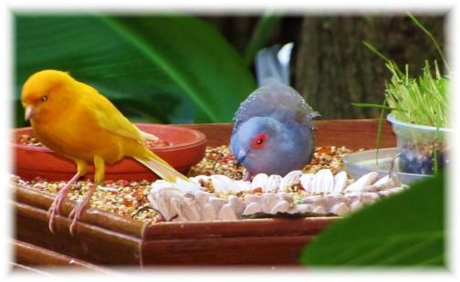 Colorful birds (Georgia)